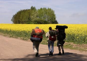 Pilger am Rapsfeld